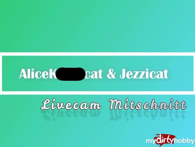 Livecam Mitschnitt_RimmCats